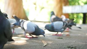 Τα τρόφιμα πουλιών πόλεων τρώνε φιλμ μικρού μήκους