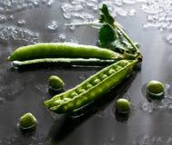 Τα υγρά πράσινα μπιζέλια στον πίνακα ποτίζουν το φρέσκο λαχανικό σπόρου στοκ εικόνες με δικαίωμα ελεύθερης χρήσης