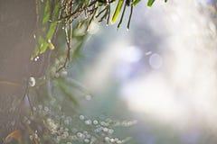 Τα υγρά πράσινα φύλλα, κινηματογράφηση σε πρώτο πλάνο εστίασης σημείων, πράσινα φύλλα θόλωσαν bokeh και δίκαιος φακός ως υπόβαθρο στοκ εικόνα με δικαίωμα ελεύθερης χρήσης