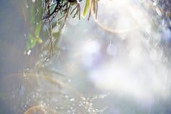 Τα υγρά πράσινα φύλλα, κινηματογράφηση σε πρώτο πλάνο εστίασης σημείων, πράσινα φύλλα θόλωσαν bokeh και δίκαιος φακός ως υπόβαθρο στοκ φωτογραφία με δικαίωμα ελεύθερης χρήσης