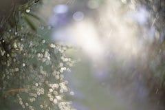 Τα υγρά πράσινα φύλλα, κινηματογράφηση σε πρώτο πλάνο εστίασης σημείων, πράσινα φύλλα θόλωσαν bokeh και δίκαιος φακός ως υπόβαθρο στοκ φωτογραφίες