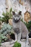 Τα υπνωτικά μάτια της γάτας στοκ φωτογραφίες