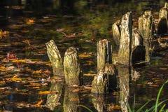 Τα υπολείμματα της παλαιάς τράπεζας περιφράζουν μέσα το νερό και τα φύλλα στοκ φωτογραφίες