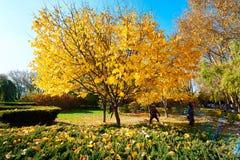Τα φθινοπωρινά δέντρα στοκ εικόνες με δικαίωμα ελεύθερης χρήσης