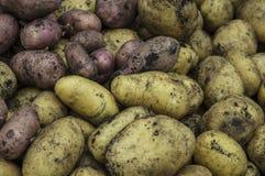 Τα φθινοπωρινά λαχανικά συλλέγουν Στοκ Φωτογραφία