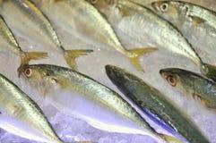 Τα φρέσκα θαλασσινά εισάγονται σε θαλασσινά παρουσιάζουν στο Βιετνάμ Στοκ Εικόνες