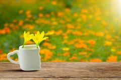 Τα φρέσκα κίτρινα λουλούδια στο άσπρο φλυτζάνι με την καρδιά διαμόρφωσαν τον κάτοχο ξύλινο tabletop grunge στο θολωμένο λιβάδι στ Στοκ Φωτογραφία
