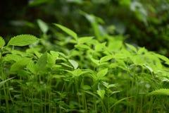 Τα φρέσκα πράσινα φύλλα της χλόης Στοκ Φωτογραφίες