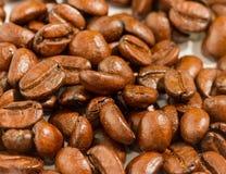 Τα φρέσκα φασόλια καφέ δείχνουν το εύγευστους εστιατόριο και τους καφέδες στοκ φωτογραφίες με δικαίωμα ελεύθερης χρήσης