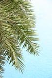 Τα φρέσκα φύλλα φοινικών στο όμορφο υπόβαθρο καθαρού νερού στοκ εικόνες