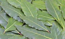 τα φρέσκα χορτάρια κόλπων απομόνωσαν τα φύλλα άσπρα Στοκ Εικόνα