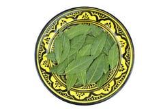 τα φρέσκα χορτάρια κόλπων απομόνωσαν τα φύλλα άσπρα Στοκ Εικόνες