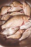 Τα φρέσκα ψάρια βρίσκονται στο νεροχύτη πρίν εξεντερίζουν και καθαρίζουν Στοκ Εικόνες