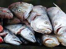 Τα φρέσκα ψάρια θάλασσας για πωλούν σε μια αγορά Στοκ Φωτογραφία