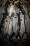 Τα φρέσκα ψάρια, μπορούν να χρησιμεύσουν ως ένα υπόβαθρο, με την αντανάκλαση του φωτός στην επιφάνεια των ψαριών Στοκ Εικόνα
