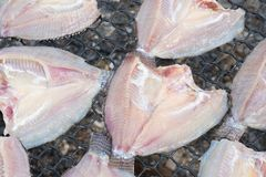 Τα φρέσκα ψάρια στο πλαστικό καθαρό κατώτερο φως ήλιων για κάνουν τα αποξηραμένα ψάρια Στοκ φωτογραφία με δικαίωμα ελεύθερης χρήσης