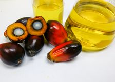 Τα φρούτα και το φοινικέλαιο φοινικών, ένα φρούτα κόβονται παρουσιάζουν πυρήνα Στοκ φωτογραφίες με δικαίωμα ελεύθερης χρήσης