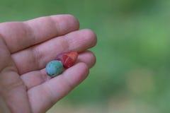 Τα φρούτα των εγκαταστάσεων Podocarpus Στοκ φωτογραφία με δικαίωμα ελεύθερης χρήσης