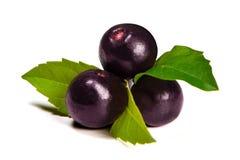 Τα φρούτα acai της Αμαζώνας Στοκ Φωτογραφία