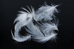 Τα φτερά είναι όνειρα στοκ φωτογραφίες