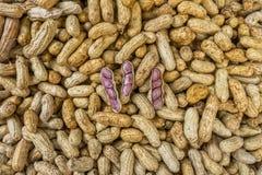 Τα φυστίκια για την πώληση στην ταϊλανδική φρέσκια αγορά Στοκ φωτογραφία με δικαίωμα ελεύθερης χρήσης