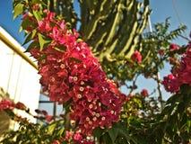 Τα φωτεινά κόκκινα λουλούδια σε έναν κλάδο Στοκ Εικόνα