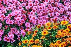 τα φωτεινά λουλούδια που αυξάνονται Στοκ φωτογραφίες με δικαίωμα ελεύθερης χρήσης