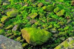 Τα φύκια σε μια θάλασσα λικνίζουν στοκ φωτογραφία