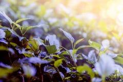 Τα φύλλα ανάβουν Στοκ Φωτογραφίες