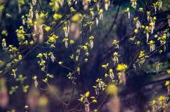 τα φύλλα αναπηδούν τις νε&omic στοκ φωτογραφίες με δικαίωμα ελεύθερης χρήσης
