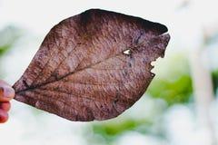 Τα φύλλα βλασταίνουν μέχρι το χρόνο στοκ φωτογραφίες