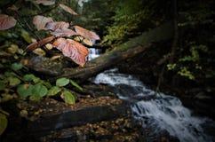 Τα φύλλα διαρκούν παρουσιάζουν κατά το αναχώρηση στοκ εικόνες
