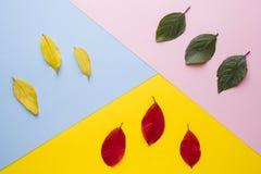 Τα φύλλα είναι πράσινα, κίτρινα και κόκκινα Αφαίρεση, η έννοια του φθινοπώρου στοκ εικόνες