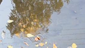 Τα φύλλα επιπλέουν σε μια λακκούβα το φθινόπωρο στον ηλιόλουστο θυελλώδη καιρό φιλμ μικρού μήκους