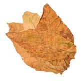 Τα φύλλα καπνών ξεραίνουν Στοκ Εικόνες