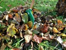 Τα φύλλα λεπτομέρειας φθινοπώρου στην πράσινα χλόη και το υπόβαθρο Στοκ Εικόνες