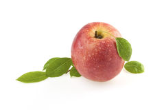τα φύλλα μήλων αυξήθηκαν Στοκ φωτογραφίες με δικαίωμα ελεύθερης χρήσης
