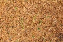 Τα φύλλα ξεραίνουν και πράσινο φύλλο για το υπόβαθρο Στοκ εικόνα με δικαίωμα ελεύθερης χρήσης
