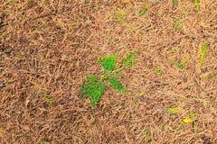 Τα φύλλα ξεραίνουν και πράσινο φύλλο για το υπόβαθρο Στοκ Εικόνα