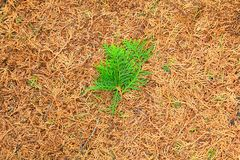 Τα φύλλα ξεραίνουν και πράσινο φύλλο για το υπόβαθρο Στοκ Φωτογραφία