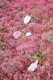 Τα φύλλα ξεραίνουν με το πεσμένο υπόβαθρο με την κόκκινη ανθίζοντας χλόη Στοκ Εικόνα