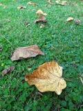 Τα φύλλα ξεραίνουν στους πράσινους χορτοτάπητες στο πάρκο Στοκ φωτογραφία με δικαίωμα ελεύθερης χρήσης