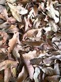 Τα φύλλα ξεραίνουν στο έδαφος Στοκ Εικόνα