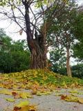 Τα φύλλα πέφτουν κάτω στοκ εικόνα με δικαίωμα ελεύθερης χρήσης