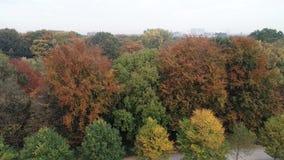 Τα φύλλα παίρνουν ένα διαφορετικό χρώμα στην αρχή του φθινοπώρου απόθεμα βίντεο