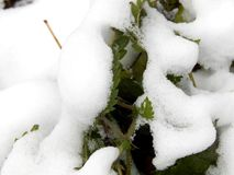 Τα φύλλα πράσινο nettle στο χιόνι κλείνουν επάνω Στοκ φωτογραφία με δικαίωμα ελεύθερης χρήσης