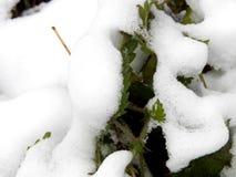Τα φύλλα πράσινο nettle στο χιόνι κλείνουν επάνω Στοκ φωτογραφίες με δικαίωμα ελεύθερης χρήσης