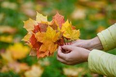 Τα φύλλα σφενδάμου παραδίδουν μέσα το πάρκο πτώσης Στοκ Εικόνες