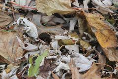 Τα φύλλα της πτώσης στοκ εικόνες
