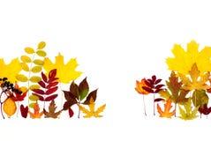 Τα φύλλα φθινοπώρου είναι διαφορετικά Στοκ Εικόνες